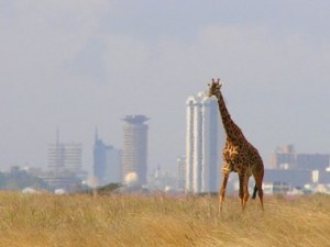 Giraffe_-_Skyline_-_Nairobi_-_Park-380x285